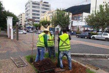 déficit de árvores - Jornal da Cidade