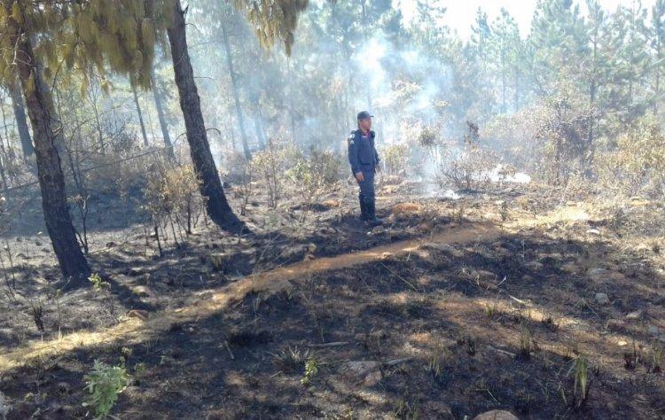 Incêndio na serra de são domingos - Jornal da Cidade