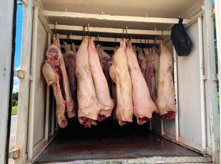 apreensão de carne suína imprópria - Jornal da Cidade