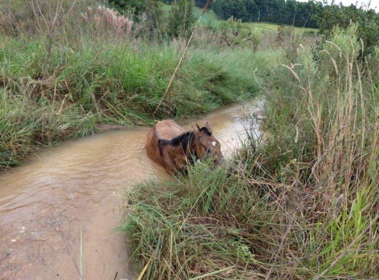 cavalo atolado em riacho - Jornal da Cidade