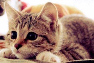 10-razões-para-se-ter-um-gato - Jornal da Cidade