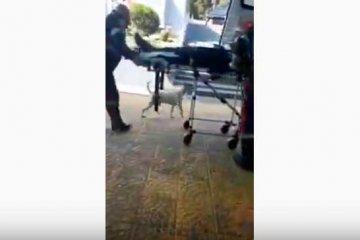 cão-entra-na-ambulância - Jornal da Cidade