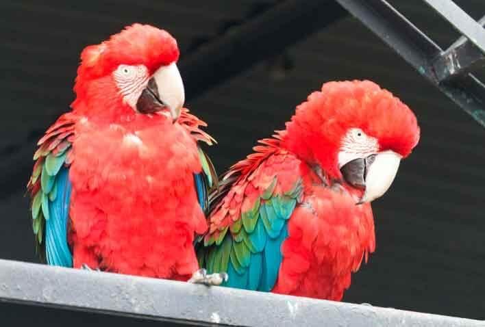Zoo das Aves - Jornal da Cidade