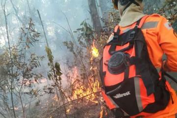 incêndio-na-zona-rural-de-Caldas - Jornal da Cidade