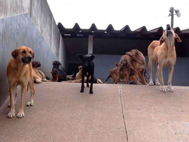 ocorrência-de-animais-de-rua (1)
